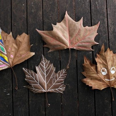 Autumn STEAM: tracing the veins of a leaf