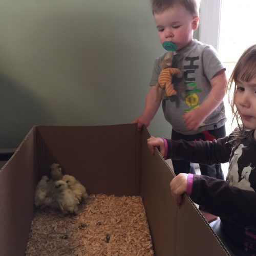 Luke & Addie checking the new baby chickens! https://haleysvintage.com #baby #chickens